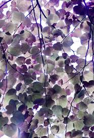 Colors Of Purple Best 20 Purple Wallpaper Ideas On Pinterest U2014no Signup Required