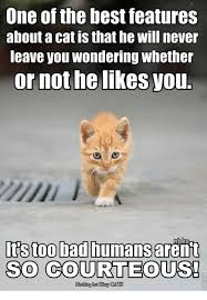 Too Bad Meme - one of the best features about a cat is that he will never leave you