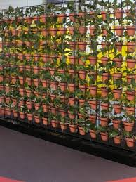 Vertical Garden Pot - terracotta pots look great in a green wall or vertical garden see