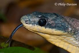 spirit halloween jumping snake february 2013 philip u0027s blog
