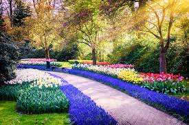 colorful flower gardens netherlands images u0026 stock pictures royalty free netherlands