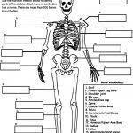 skeletal system worksheet skeletal system worksheet pdf best 25