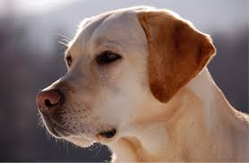 Temporary Blindness In Dogs Side Effects Of Dog Seizures Canna Pet