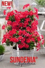 flower garden design ideas archives home joy geraniums and