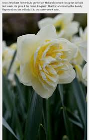 17 best images about garden bulb mania r on pinterest