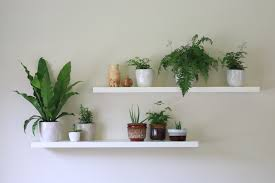 how to have healthy and happy indoor plants little eco footprints