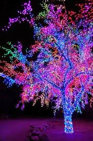 Outdoor Christmas Decorations Sydney by 91 Best Christmas Lights Images On Pinterest