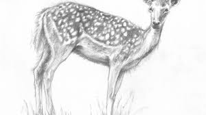 pencil drawings of animals easy how to draw an easy wolf step step