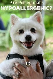 21 best Pets images on Pinterest
