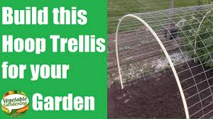 build this hoop trellis to grow your cantaloupe and watermelon