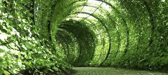 Summer Garden Ideas - garden inspiration for summer speed property buyers