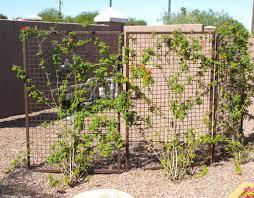 gallery u2013 arizona trellis u2013 gardening trellises