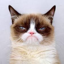 Meme Generator Grumpy Cat - grumpy cat outside meme generator imgflip