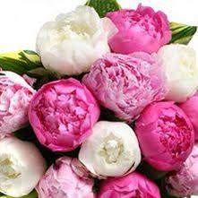 wholesale peonies wholesale peony guide wedding flower guides uk triangle nursery