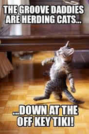 Herding Cats Meme - meme creator the groove daddies are herding cats down at