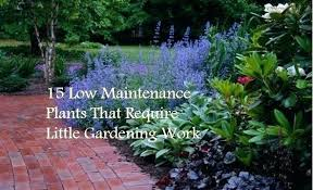 Low Maintenance Front Garden Ideas Low Maintenance Plants For Front Garden Image For Low