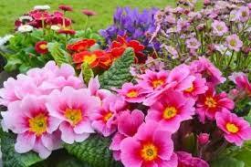 flower garden wallpapers for desktop u2013 home design and decorating