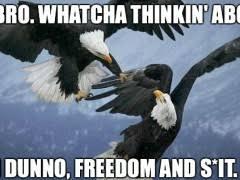 Freedom Meme - freedom meme weknowmemes