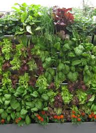 retrofit u2013 install a vertical garden to enhance your lifestyle