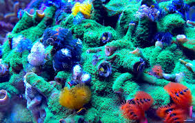 i u0027m dying for a xmas tree worm rock like this coral videos reef