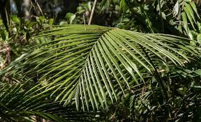 australian native plant free images tree branch leaf flower green jungle botany