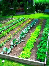 Herb Garden Layout by Vegetable Garden Layout Ideas Vegetable Garden Layout Ideas