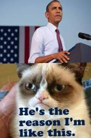 Whats In The Box Meme - what s in the box grumpy cat google search www