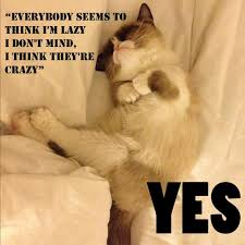 Grumpy Cat Yes Meme - grumpy cat beatles memes turd hates everything