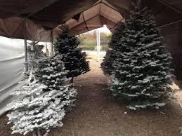 where to buy a christmas tree in concord concord ca patch