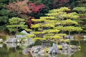 japanese zen garden in kinkakuji temple park kyoto gardens