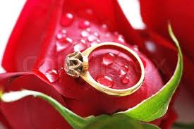 red rose rings images Wedding ring with brilliant on the red rose stock photo colourbox jpg