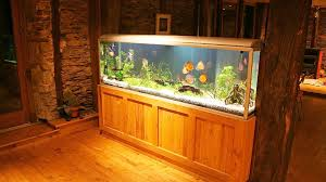 Aquarium Decor Ideas Decor Nice Outstanding Aquarium Big Fish Tanks For Sale With Big