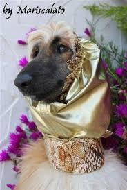 afghan hound fabric collar u0026leash mariscalato s afghans