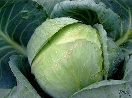 comment cuisiner le chou vert que faire avec du chou vert blogbio