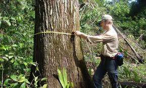 chasing carbon 5 known facts about trees and co2 care2
