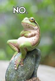 No Meme Images - no frog memes and comics