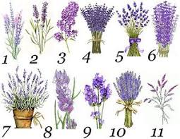 lavender flowers lavender flowers small or large sticky white paper stickers labels