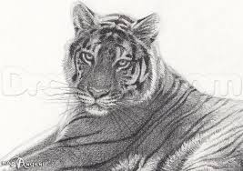 learn how to sketch a bengal tiger forest animals animals free