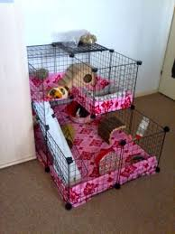 discussion forum for guinea pig cages cavy cages care housing