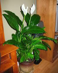 The Best Indoor Plants The Best Indoor Plants Home Design Ideas