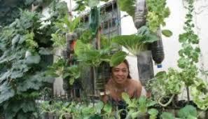Vertical Garden Adalah - 30 jenis tanaman hias untuk taman dinding vertikal beserta gambarnya