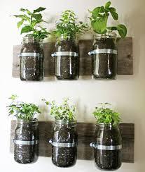 plante pour cuisine plante pour cuisine fleur de