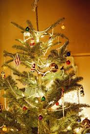 christmas tree tips by sprout home huffpost