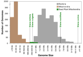 silene mitochondrial genome sizes relative to all sequenced