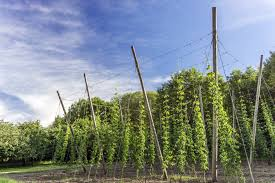 view hops supplies online orchard valley supply