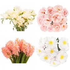 flower of the month subscriptions flower muse