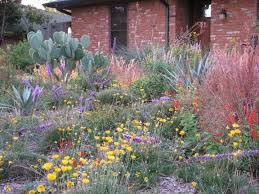 small native plants for australian gardens native plant garden design australian native plants society