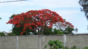 native plants of madagascar and so it begins trees flowers and shrubs of madagascar
