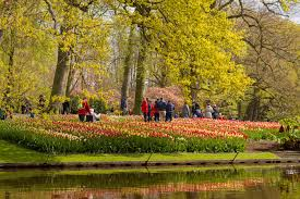 keukenhof flower gardens guide to seeing the tulips near amsterdam