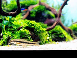 Aquarium Aquascapes Achieving Good Water Quality In Your Aquarium Aquascaping Youtube